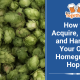 How to Acquire, Grow, and Harvest Your Own Homegrown Hops